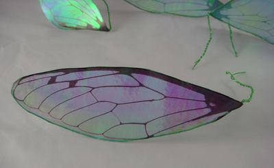 Transparency film wings closeup of front