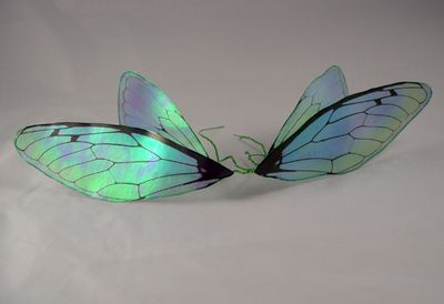 Transparency film wings front sides