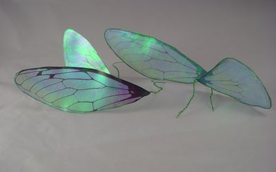 Transparency film wings front side on left back side on right