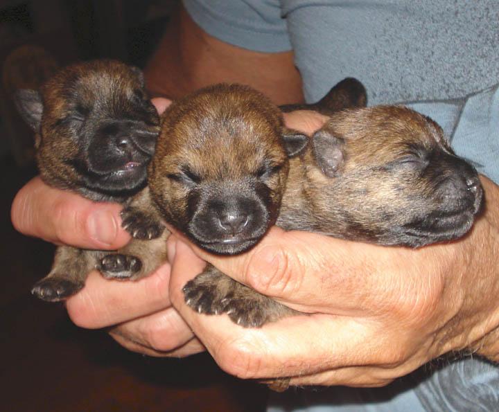 Week old pups