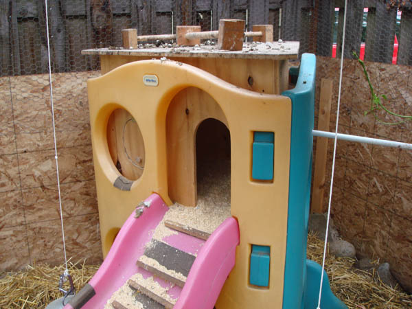 Chicken Coop pic2