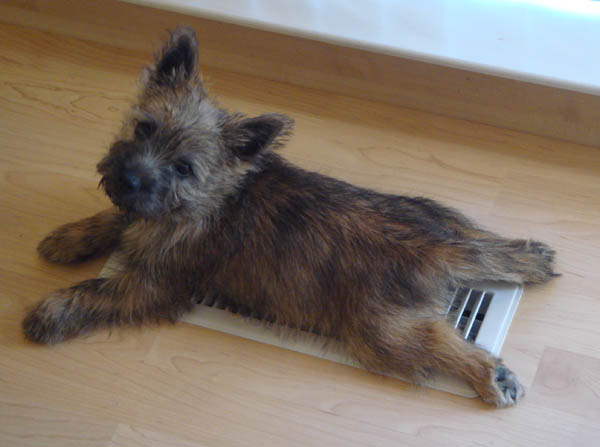 Fearghus cooling off on the vent