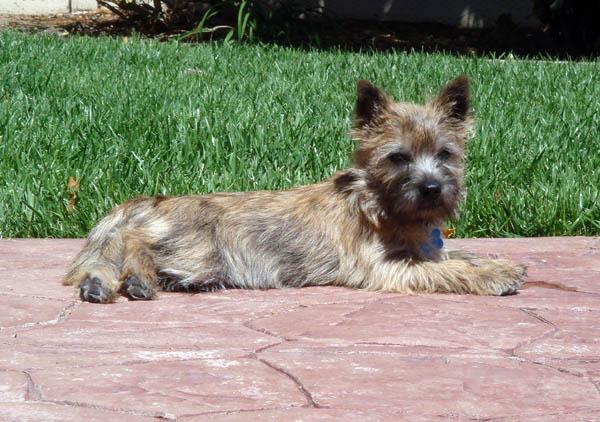 Fearghus sunbathing