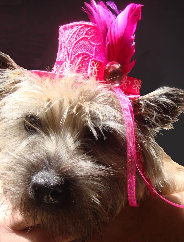 Fearghus wearing pink hat