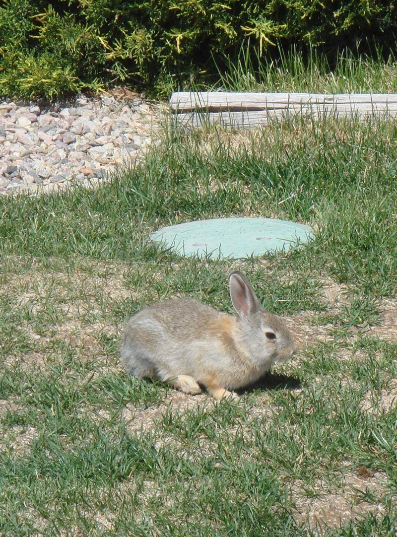 Bunny at Cheyenne KOA