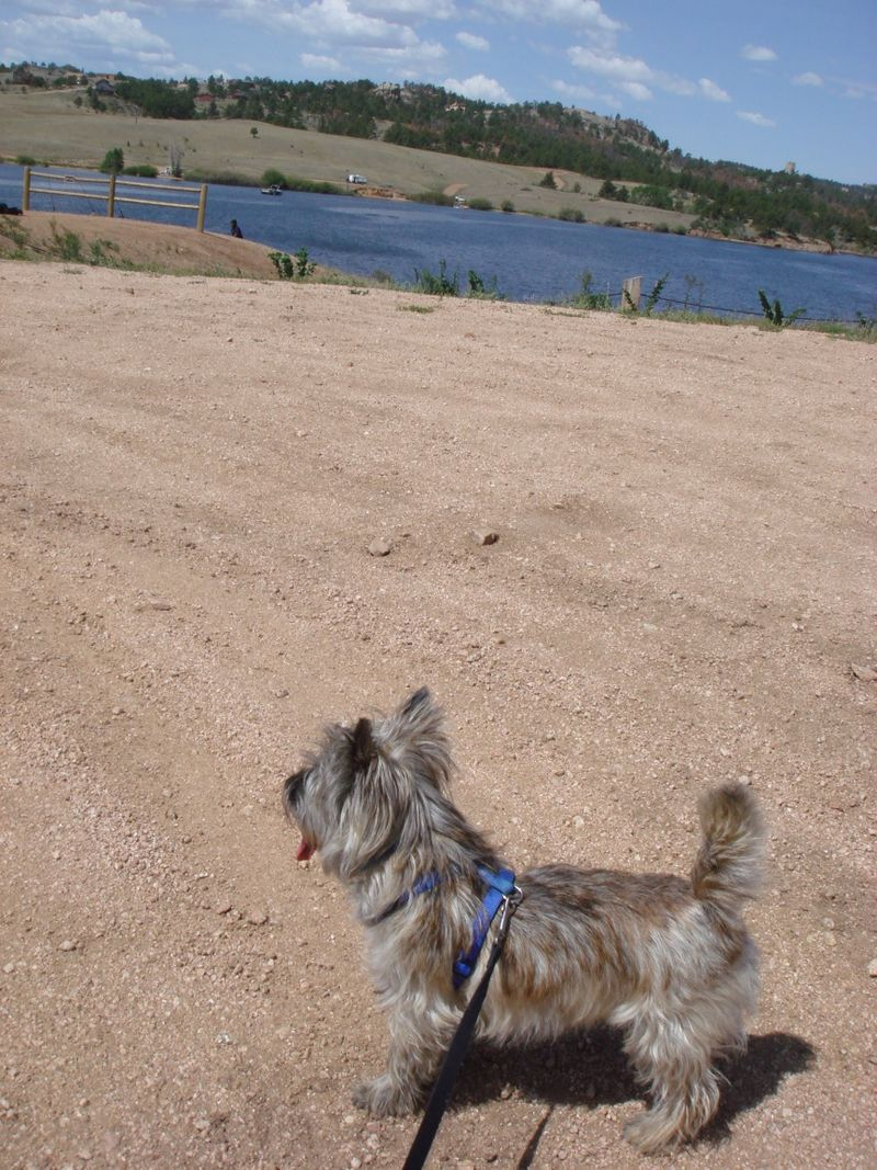 Fearghus at Curt Gowry Park in WY