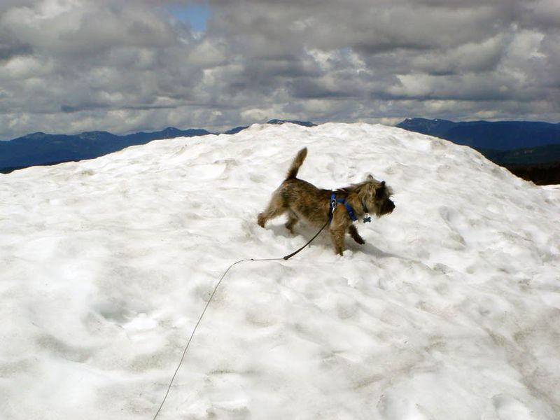 Fearghus playing in snow in July