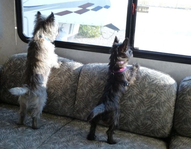 Fearghus and Fiona looking out RV window