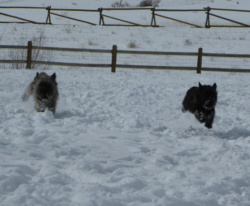 Fearghus and Fiona running in snow