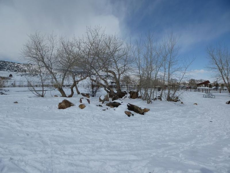 Fort Collins CO dog park March 2013