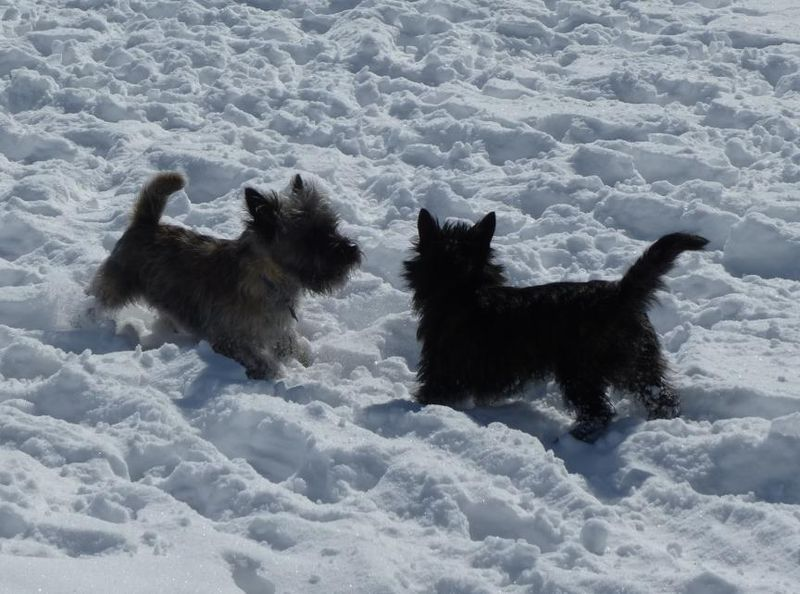 Fearghus and Fiona in the snow