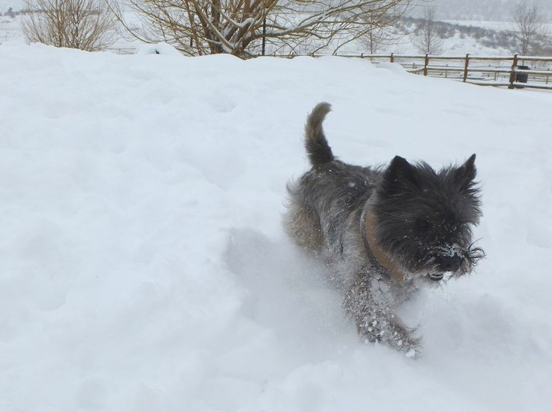 Fearghus Running in Snow 2014 copy
